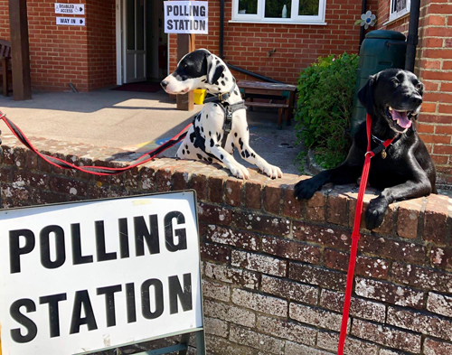 Two dogs outside a pollling station.