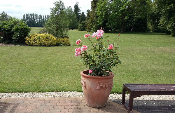 A flowerpot, with roses, overlooking a large lawn with trees and shrubs.